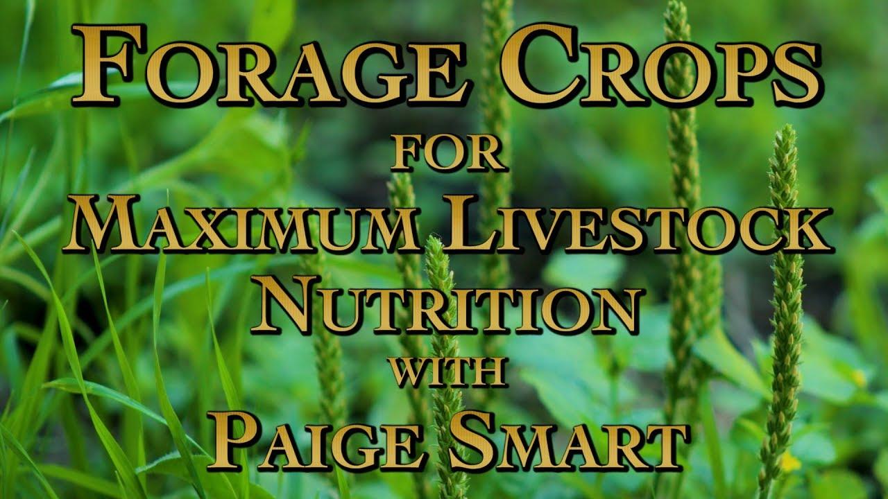 Forage Crops for Maximum Livestock