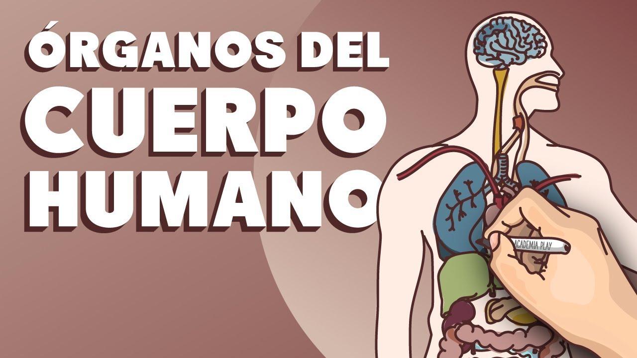 Órganos del cuerpo humano - YouTube
