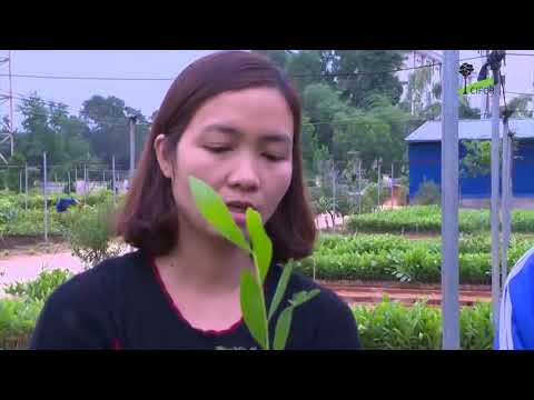 View from Vietnam: Gender equity in PES and REDD+