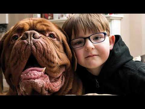 Взрослые заметили, что пес всё время держится справа от мальчика. Оказалось, он кое-что знал