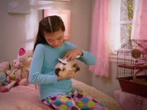 Petsmart Commercial Small Pet Youtube