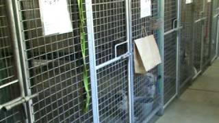 Golden Grove Boarding Kennels Small Dog Kennels