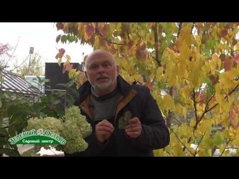 Дырки и пятна на листьях земляники