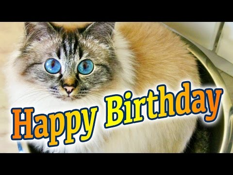 Birman Cat Birthday Song