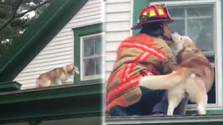 Dog Gives Thank You Kiss to Firefighter Who Saved Him From Roof