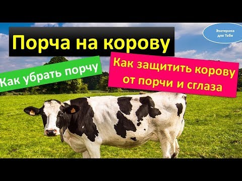 Вопрос: Что делать, если начала свою корову бояться?