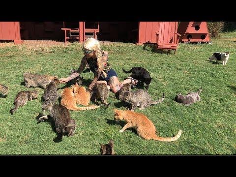 Live from Lanai Cat Sanctuary