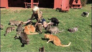 Live from Lanai Cat Sanctuary thumbnail