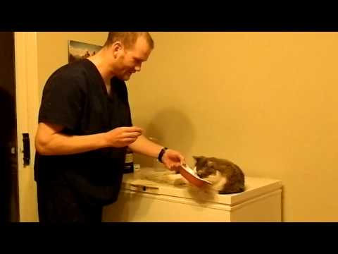 Dr. Murray Matheson, Veterinarian: How to Feed Mila Omega 3 fatty acids to your pets.