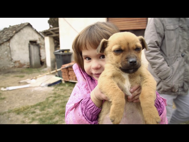 Pomoć porodici Bošnjaković iz Smederevske Palanke - Srbi za Srbe