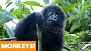 Best of Monkeys | Funny Pet Videos