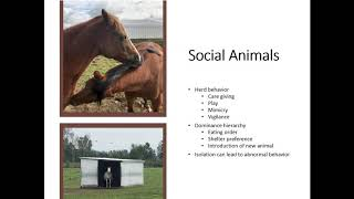 Healthy Horse Housing