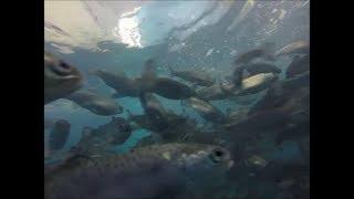 видео Содержание искусственных прудов