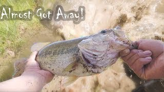 Almost lost a Big Bass!!!