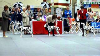 Summit Dalmatians, Deby And Ava, Dalmatian Club Of America National Specialty