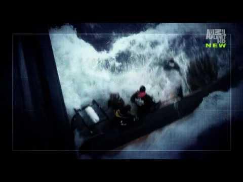 Whale Wars Season 3 Theme / Opening