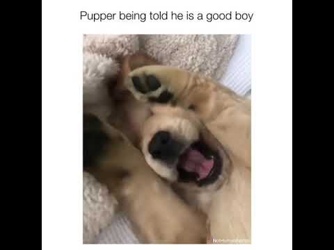 Pupper being told he's a good boy *aww