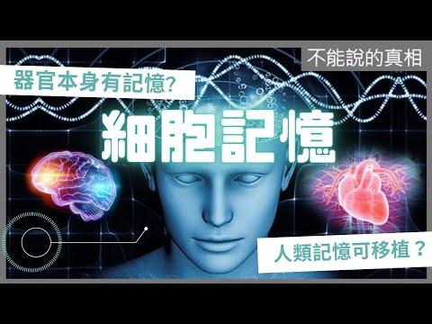 2011-10-20《不能說的真相》- 細胞記憶 - YouTube