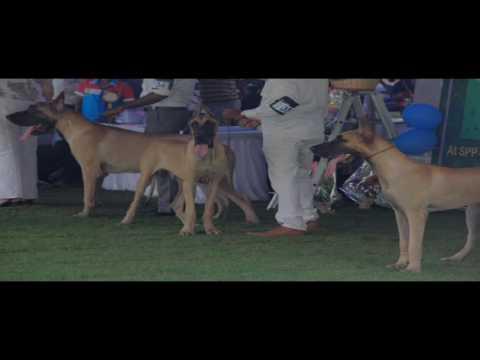 Dog Show in Shiva Parvathi Pushpa Garden