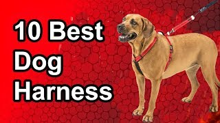 10 Best Dog Harnesses 2019