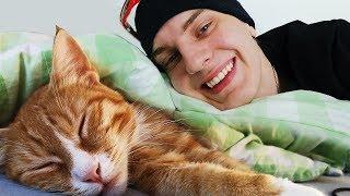 Ich habe eine Katze von der Straße adoptiert