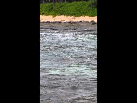 Seal in Hawaii