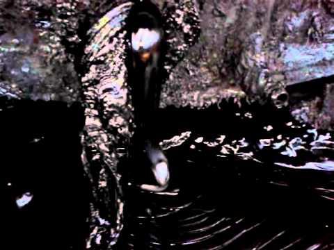Film1/3T тяжелый мазут - оригинал. heavy fuel oil - the original