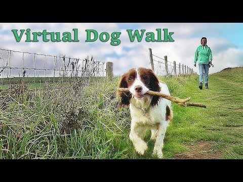 TV for Dogs - Virtual Walk Your Dog TV - Coastal Path