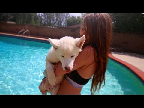 TEACHING PUPPY HOW TO SWIM!