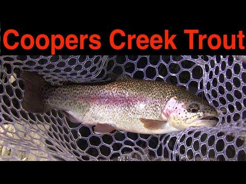 Trout Fishing Georgia's Coopers Creek