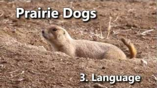 Researchers have decoded prairie dog language