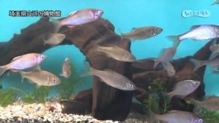 川の博物館【埼玉県公式観光動画】