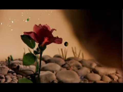 El principito : La rosa