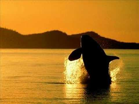 Orca:Killer Whale (soundtrack)