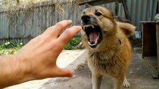 Борьба с собакой! ЗЛАЯ СОБАКА!