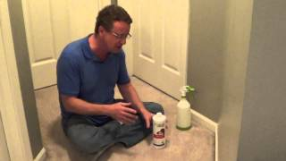 How to Clean Cat Urine - Removing Cat Urine from Carpet