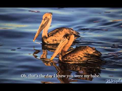 "The Honeydrippers - ""Sea of Love"" Lyrics on screen"