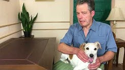 video - Help for Confused Older Dogs