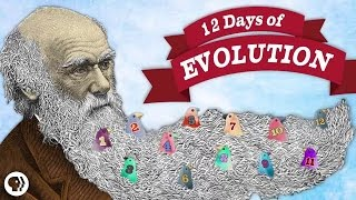 The 12 Days Of Evolution - Complete Series!