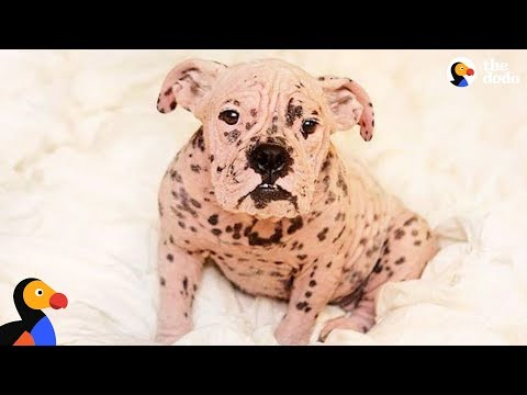 'Naked' Bulldog Makes Incredible Transformation | The Dodo