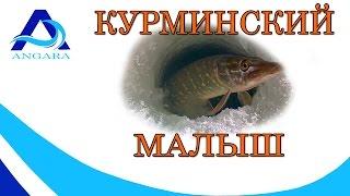 Курминский малыш Иркутского ВДХР(, 2016-12-01T13:05:49.000Z)