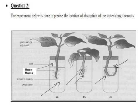 Grade 7 Semester 4 Biology Weeks 5 & 6 Review Worksheet