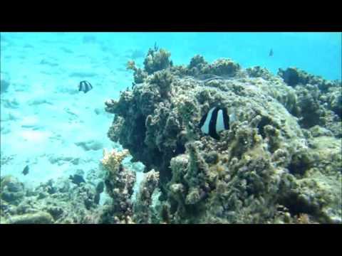 diving rarotonga