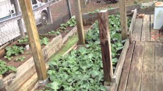 2-3-12 My Diy Vegetable Box Garden (used To Be A Dog Fence) .mov