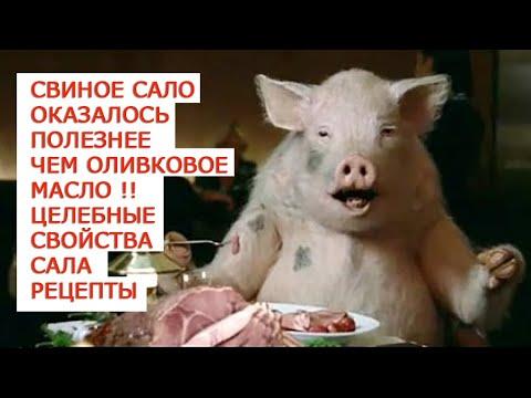 Свиное сало оказалось полезнее чем оливковое масло Целебные свойства сала  Рецепты
