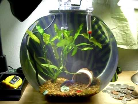 2 5 gallon planted betta bowl youtube for Acrylic vs glass fish tank