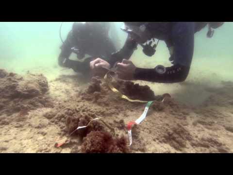 Scientific Diver Course
