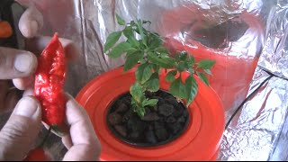Homemade Hydroponic system, self contained with lights(, 2014-07-25T21:13:24.000Z)