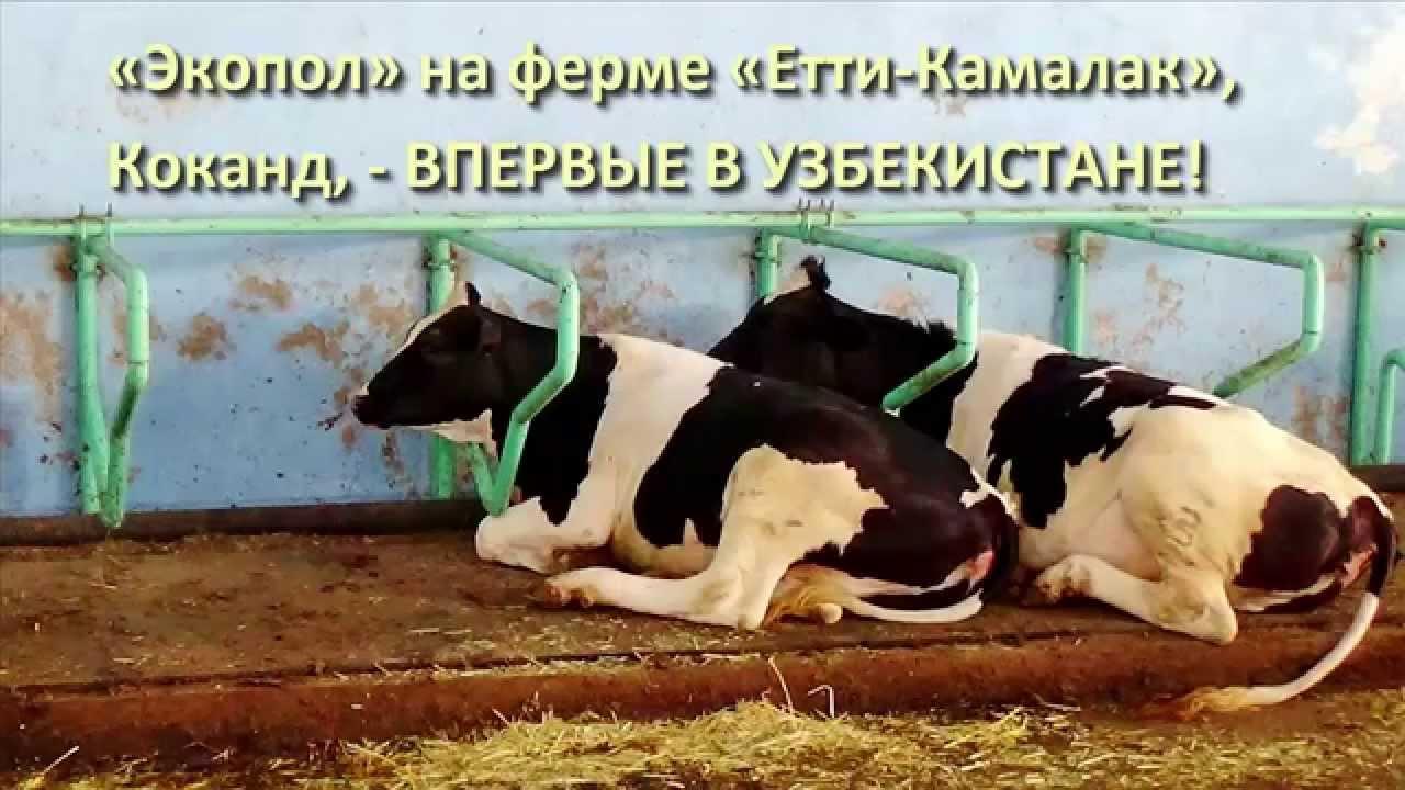 Резиновые маты KRAIBURG в боксах для отдыха коров - YouTube