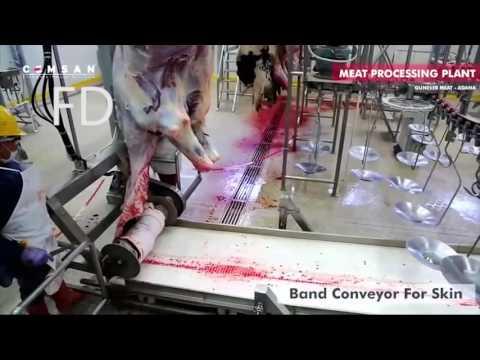 MENGERIKAN ! Proses Baru Pemotongan Sapi Dalam Pabrik !!